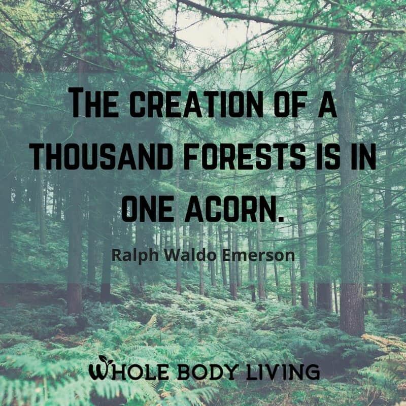 Whole Body Living