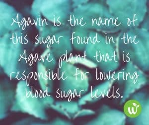 FB Agavin is the name of this sugar found in the Agave plant that is responsible for lowering blood sugar levels.