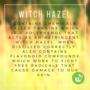 IN Witch hazel contains chemicals called