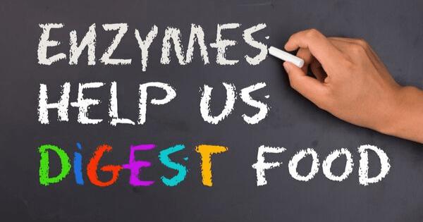 enzymes help us digest food